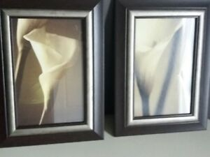 White Calla Lily Pictures