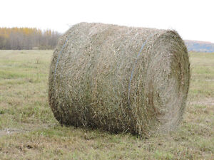 1200 pd Round Bales for Sale