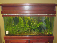 AQUARIUM 90 gal.  Complete with plants, fish, stand, CO2 etc