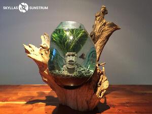 Aquarium-Terrarium- Vivarium en verre souflé et racine de teck.