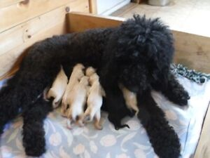 Adopt Dogs Puppies Locally In Nova Scotia Pets Kijiji Classifieds