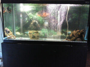 Wanting to trade my 100 and 75 gallon tanks for a 6 foot tank.