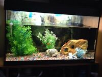 Fish tank 2ft 8inch fluvals everything included