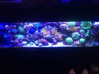 125 gallon and 90 gallon saltwater reef tanks partout