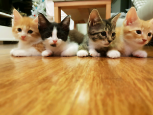Adorable kittens to good home