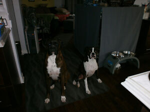 EXPERIENCED  IN-YOUR HOME/PET SITTER-24/7 St. John's Newfoundland image 3