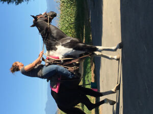 Companion .broodmare .22year old mare Sold