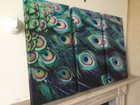 STUNNING PEACOCK FEATHERS PHOTO CANVASES