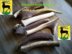 Best Antler Chews Crazy Sale (first 20 visitors only)