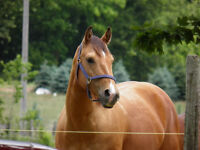 Great Lakes Stables FALL SPECIAL