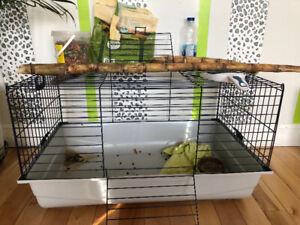 Bébé lapin nain avec cage