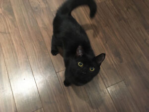 Sister kittens, 8 months old, need new home