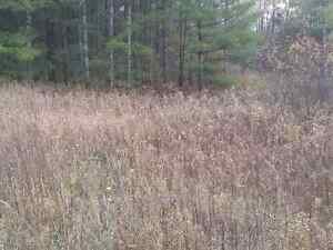 100 Acres for sale outside mount forest  Kitchener / Waterloo Kitchener Area image 10