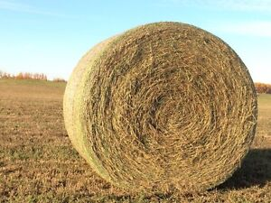 Nice 2nd cut hay