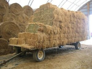 hay for sale Kingston Kingston Area image 2