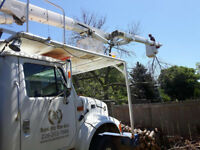 TREE REMOVAL, PRUNING, TRIMMING, STUMP GRINDING. Cert, Lic & Ins