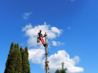 Fall Discount on Tree Removals