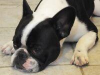 Grubby Puppy 'Splash & Dash'