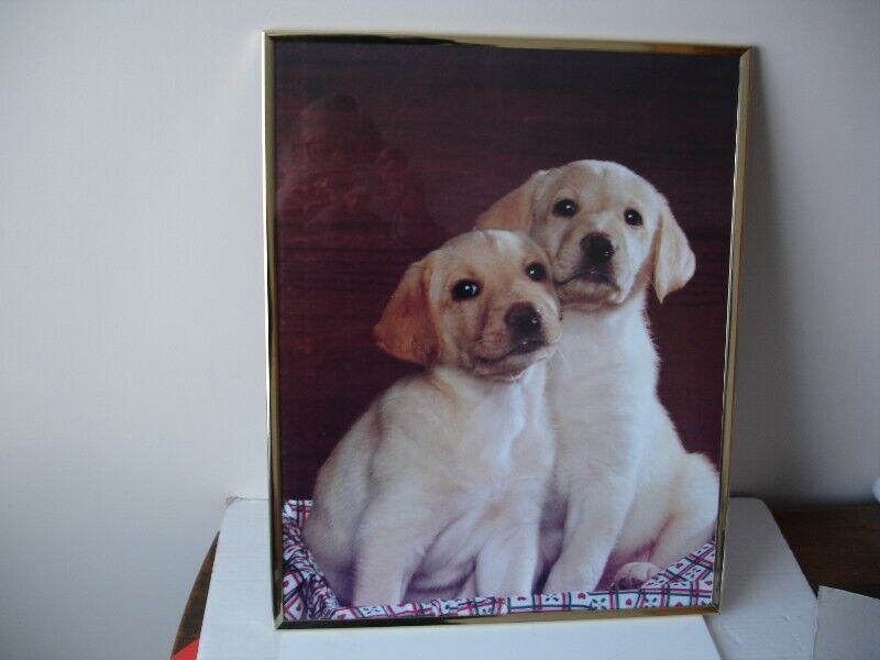"""Large Picture of Labrador Puppies 20"""""""