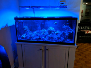 Aquarium eau salee set-up