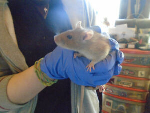 Shelter Animals-Rodents for adoption
