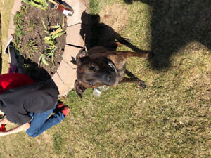 Lost our dog!! Please help!!