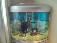 Aquarium en coin avec meuble -Corner aquarium with stand 15Gall