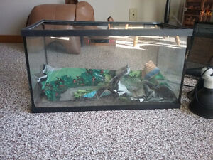 Reptile tank and lights