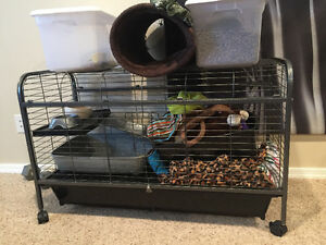 Ferret cage with everything
