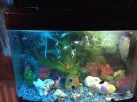 64ltr fish tank