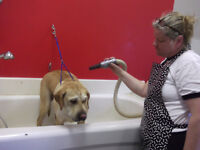 Looking to Hire Experienced Groomer
