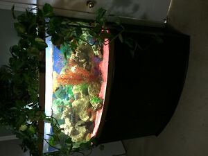 72 gallon bow front tank and cichlids Cambridge Kitchener Area image 3