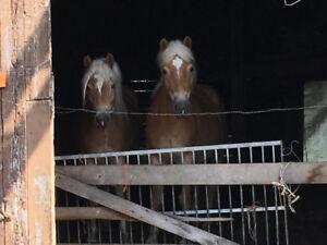Encan 21 juillet.Vaches,chevaux,moutons,tracteurs,machineries,ou