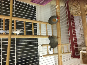 Finch couple looking for new owner