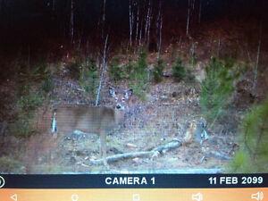Chasse disponible sur terre à bois de 115 acres
