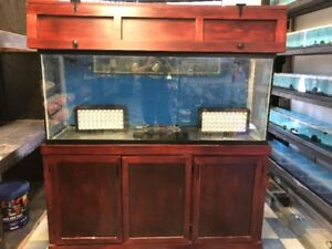 120 Gallon Saltwater Fish tank  set up