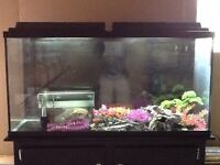 Fish tank and stand everything included