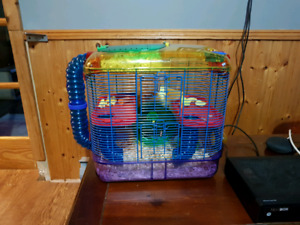 Male syrian hamster...with cage