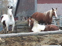 Horse Hay Wanted asap