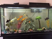 Fish and tank everything