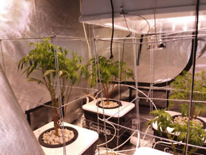 Best Hydroponic System Current Culture Under Current 8 XL
