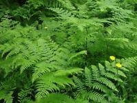 Invasive weeds specialist