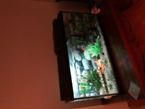An Extra Large size Aquarium 60 Gallon with Pump and accessories