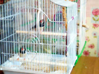 2 zebra finches n cage for sale