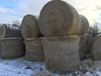 Year old wheat straw bales