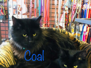 Bonded brother and sister available at pet valu