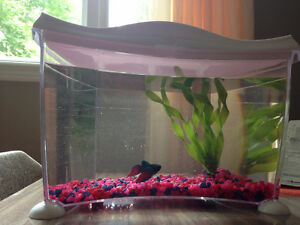Like New Betta/Goldfish Fish Tank