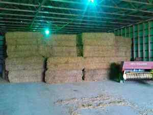 Big, small straw bales and wood shaving bales for sale