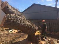 General labor  tree service / landscaping
