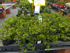 Huge range OF PLANTS 15% OFF SALE PLUS *Free Delivery GOLD COAST SALE